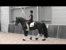 What_Do_You_Do_If_Your_Horse_Bucks_Going_In_To_Canter_Dressage_Mastery_TV_Ep207.mp4