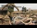 Миллионы из вечной мерзлоты: как контрабандисты зарабатывают на костях мамонтов