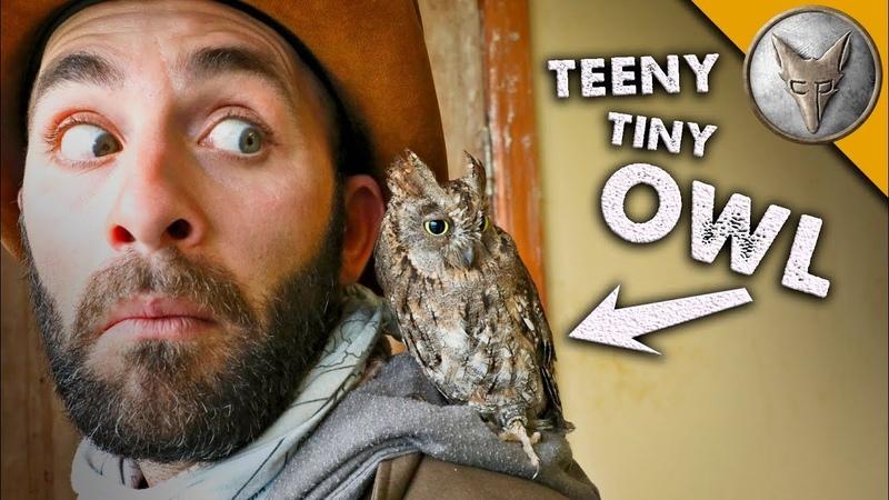 Teeny tiny OWL! (o)v(o)