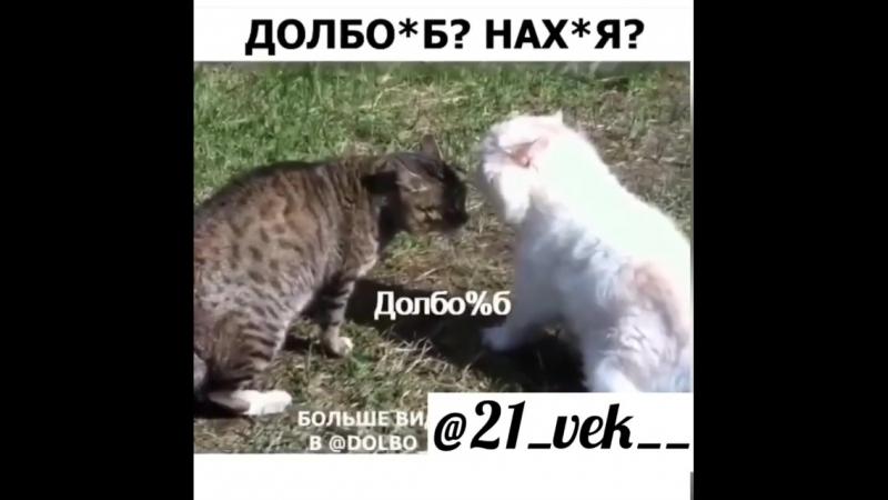 4_5946432120242044980.mp4