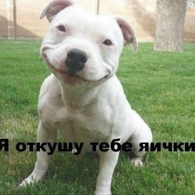 Станислав Журавлев, 14 июня , Мучкапский, id142657772