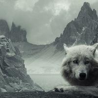 Волк Медведев