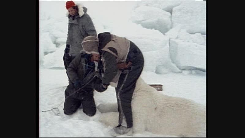 36-1 Сумерки над Аляской (Одиссея Жака Кусто HD 1987)