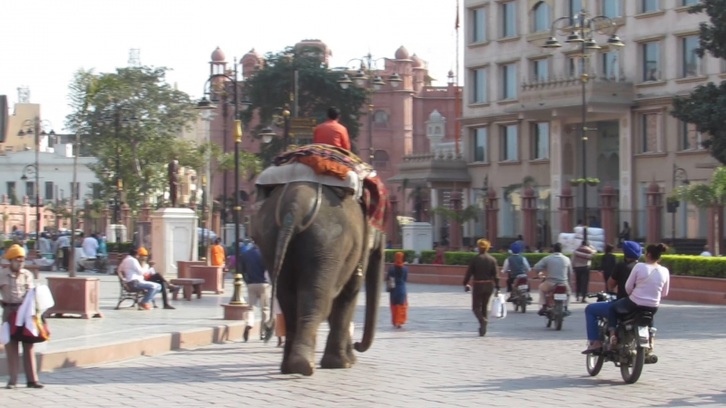 Амритсар. По улице слона водили)