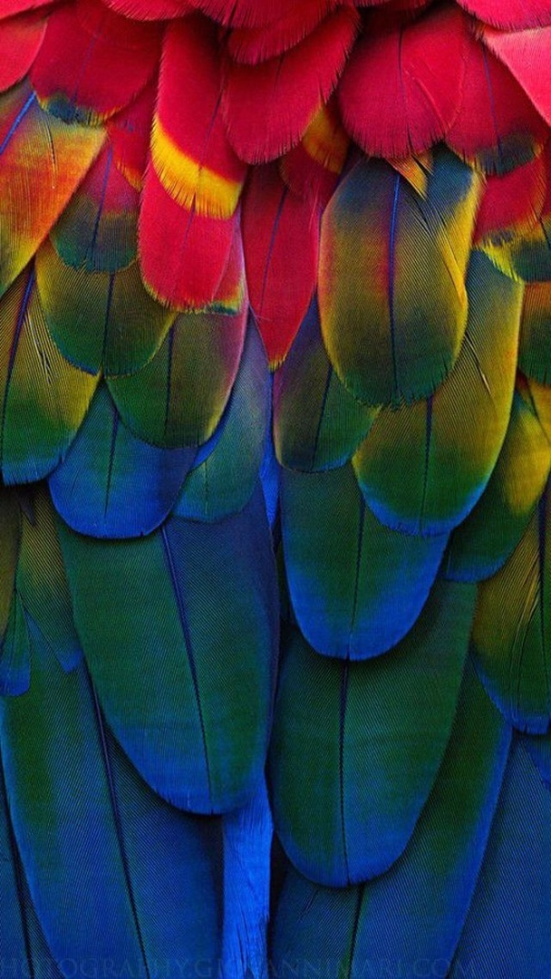 Эстетика перьев