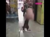 Кот нападает на мягкую игрушку