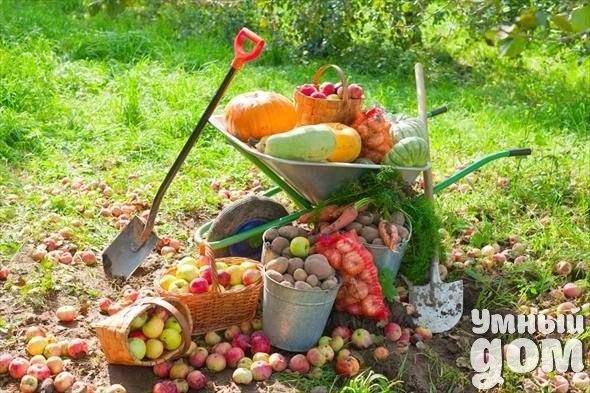 Метод «ничего-не-делания» Масанобу Фукуока по праву считается одним из сильных личностей, которые явили всему миру успешный опыт органического малозатратного земледелия. Такие люди показывают что земледелие — это увлекательное и творческое занятие, помогающее Человеку раскрыть себя, пребывая в гармонии с Природой и в здравии! Япония — очень маленькая страна. На одного жителя приходится всего 3 сотки возделываемой земли. Морепродукты и рис были и остаются традиционными в японской кухне. При…
