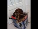 Как говорится, в тесноте да не в обиде, но этот кот явно не согласен с этим
