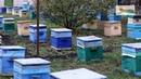 Борьба с роением Новая технология получения мёда