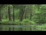 Ричард Клайдерман - Самые красивые мелодии_ Richard Clayderman