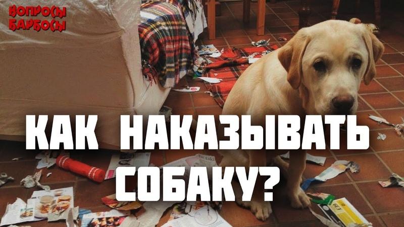 Как наказывать собаку Можно ли бить Как хвалить собаку