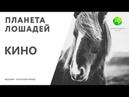 Цикл Планета лошадей   Кино (9 серия)   Канал Живая планета (эфир от 31.03.2018)