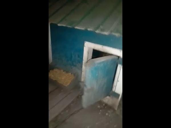 Дверь открывает собака и закрывает