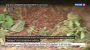 Новости на Россия 24 • Парк Зарядье безжалостно растоптан