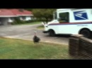 'Terrible Tom' the wild turkey causes reporter to lose her head