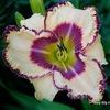 Лилейники - многолетние цветы! Наша группа вконт