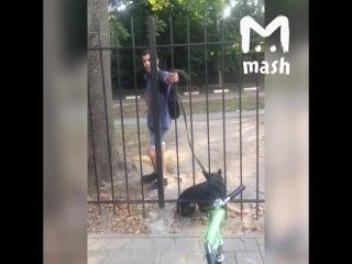 Житель Орла избил свою собаку на глазах у детей