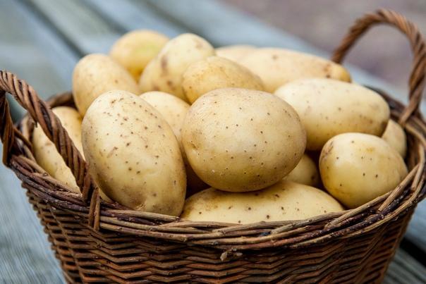 Картофель «по-русски». Как это Выращиваю картошку по старой русской технологии, в соломе, не провожу ни окучивания, ни прополки, ни полива.В прошлом году дождей было мало, стояла непривычная для