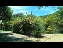 Amazing view in butterfly garden, Kep, Cambodia 4
