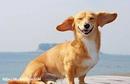 Как это ни удивительно, но собаки тоже по-своему смеются. Это выглядит…
