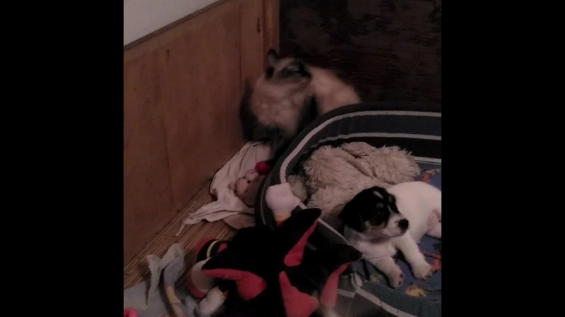 Кошка с собакой часть 2