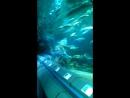 акулы с водолазам