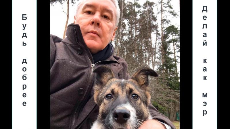 Весной мэр Москвы приютил собаку. Жительница Алтуфьева поинтересовалась, как чувствует себя пес