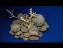 Окаменелый коралловый риф 1