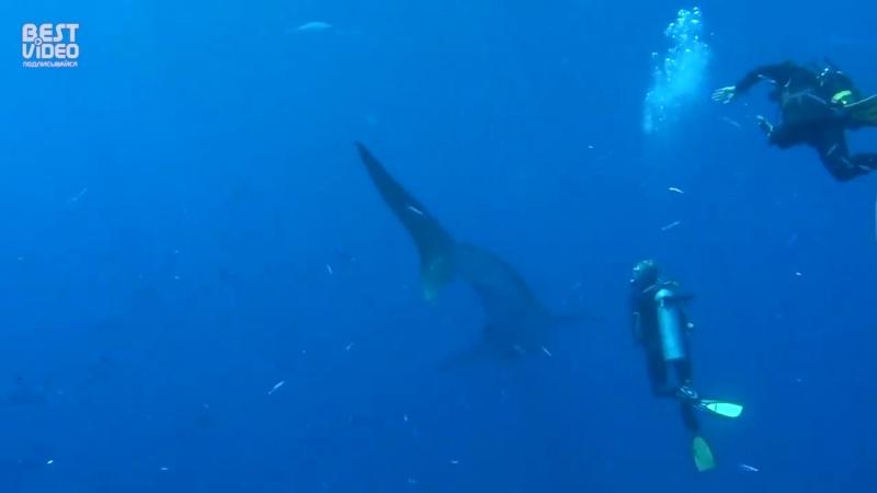 Дайвера живым коконом окружили сотни мелких рыб