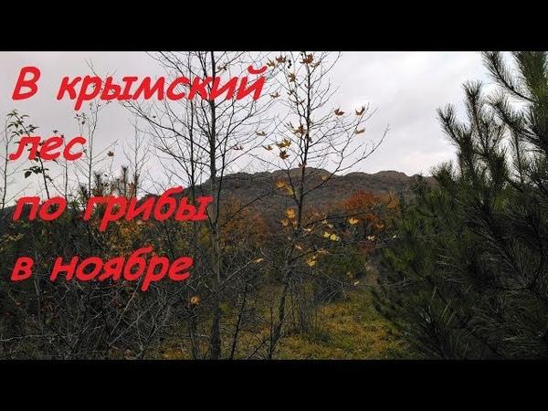 Крымский лес в ноябре под Судаком. Дубовый листопад, одинокая цапля, грибы-ягоды