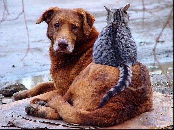 Не обижайте кошек во дворах,