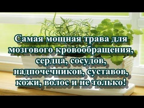Самая мощная трава для мозгового кровообращения сердца сосудов надпочечников суставов кожи вол
