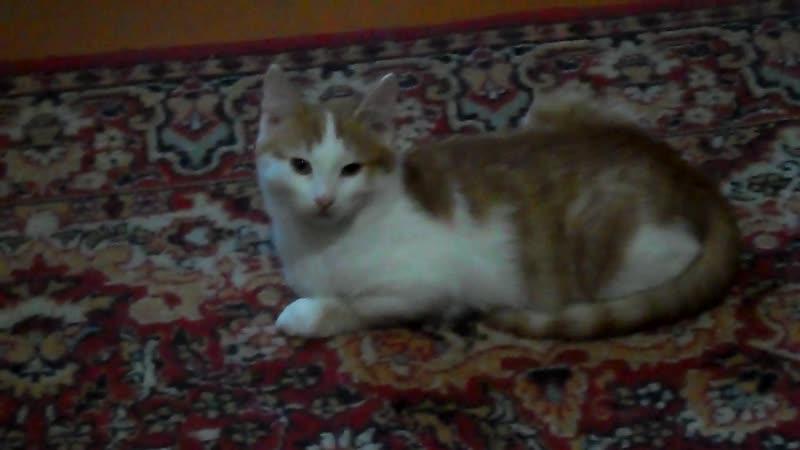 Отдам котёнка мальчика (4 месяца) в Боготоле. Тел: 89235749937 Тамара.