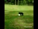 Quand ton chien est meilleur que toi au foot...