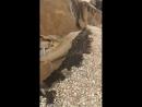 Последствия ливня возле Волгоград Арены
