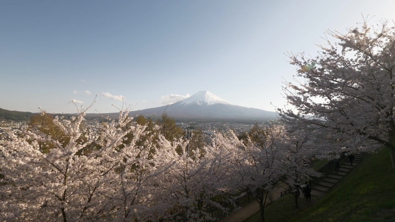 Прогулка по парку Аракураяма Сенген,Фудзиёсида. Сакура в цвету [2018 г.]