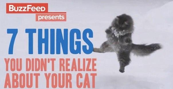 ВИДЕО: 7 интересных фактов о котах →.