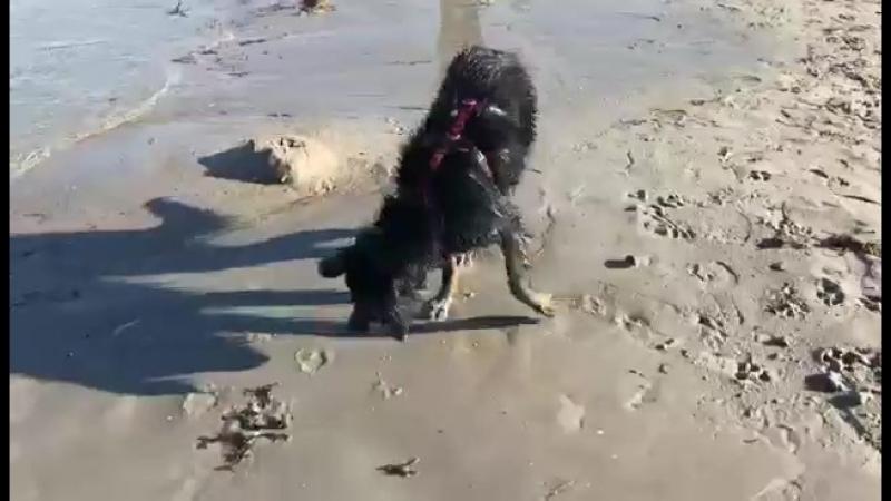 Эмигрантка Клара на море