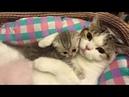 ЛУЧШЕЕ 2018 ДЕКАБРЬ Самые МИЛЫЕ и СМЕШНЫЕ котята кошки Видео СУПЕР-МЕГА подборка Ржач до слез, смех