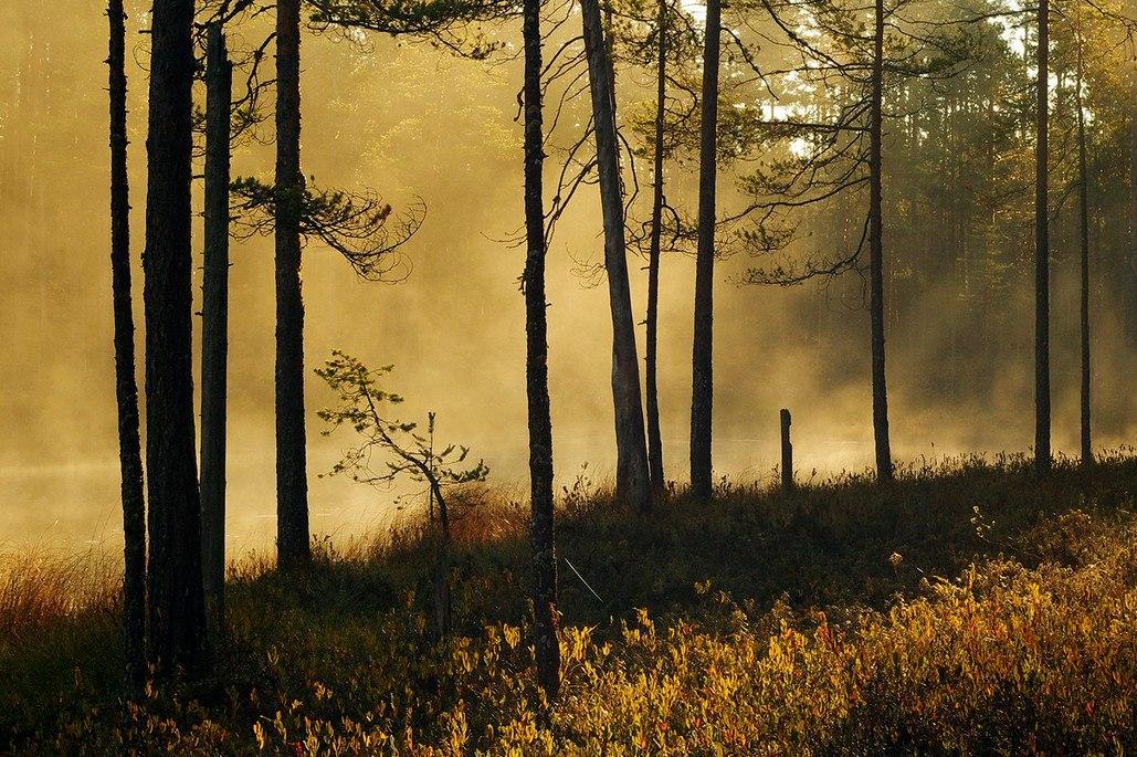 Осень в Карелии. Автор — Виктор Журавлёв