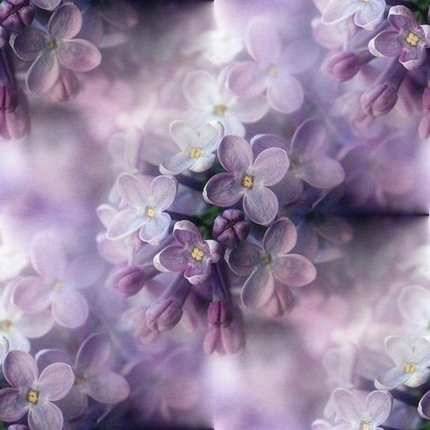 Цветочные и растительные фоны - Страница 2 MO-gpZV1rgY