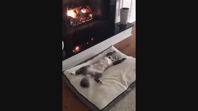 Нет ни одного человека, который, уходя рано утром на работу, не позавидовал бы своему коту...
