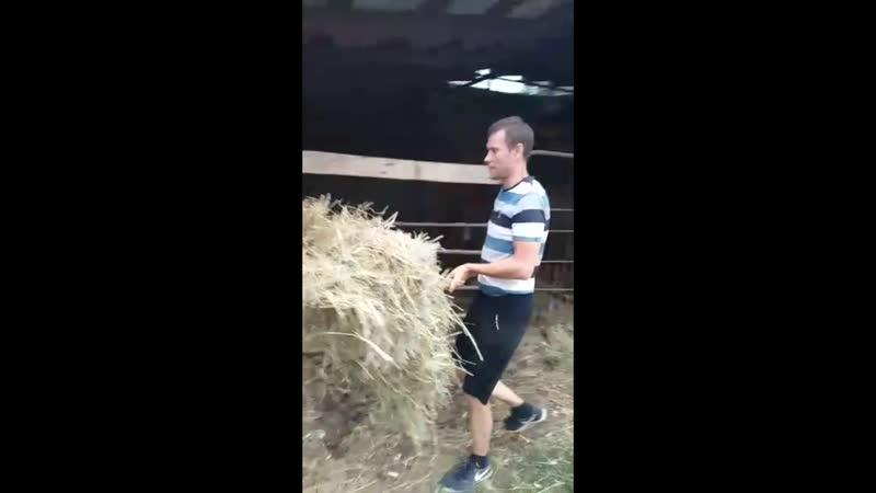 Учимся доить корову.