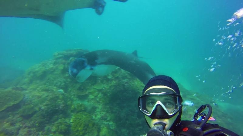 Скаты манта на дайвсайте Manta Point острова Нуса-Пенида | Дайвинг на Бали