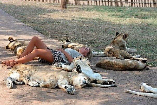 Львицы.