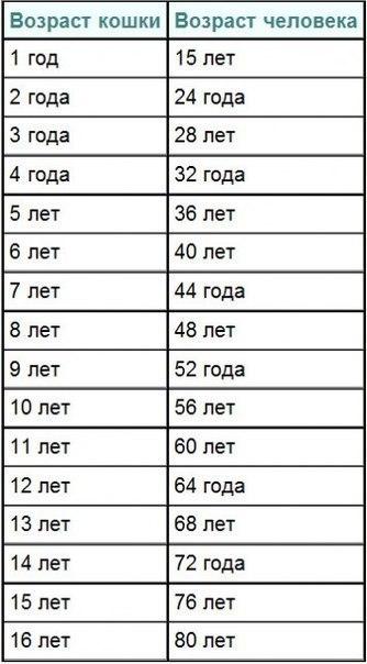 Как узнать сколько лет коты