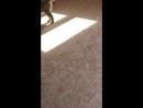 Кошачий дрифт