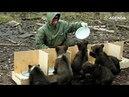 Самый необычный медвежий приют в России