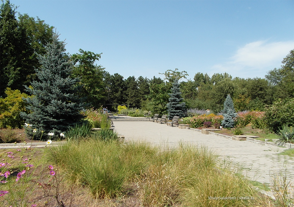 Аллеи и деревья в Ботаническом саду Алматы 2018