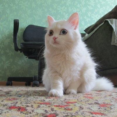 Кошка Греми, 31 января , Екатеринбург, id215513597